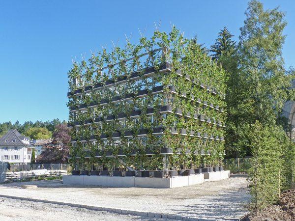 Platanenkubus : อาคารต้นไม้มีชีวิต ปลูกได้ โตได้ ไม่ทำลายสิ่งแวดล้อม