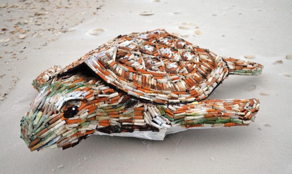'Cig' เต่าทะเลแปลงพันธุ์จากก้นบุหรี่ฝีมือมนุษย์มักง่าย