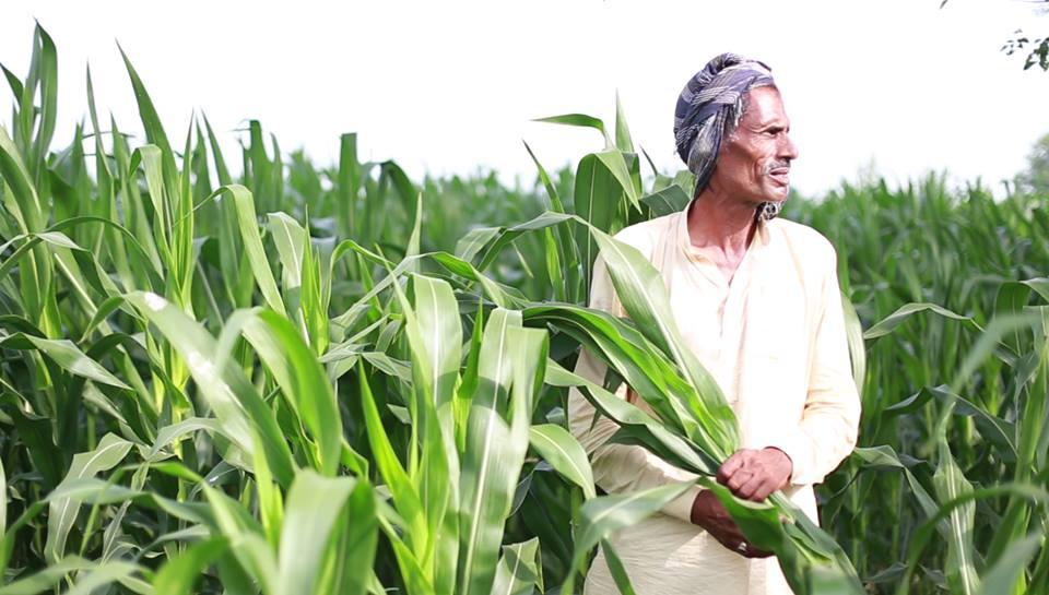 Ricult : เมื่อ Tech Startup จะแก้ปัญหาการเงินของเกษตรกรไทย