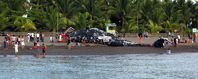 วาฬตายเกยตื้นเพราะทะเลเต็มไปด้วยมลพิษจากขยะพลาสติก
