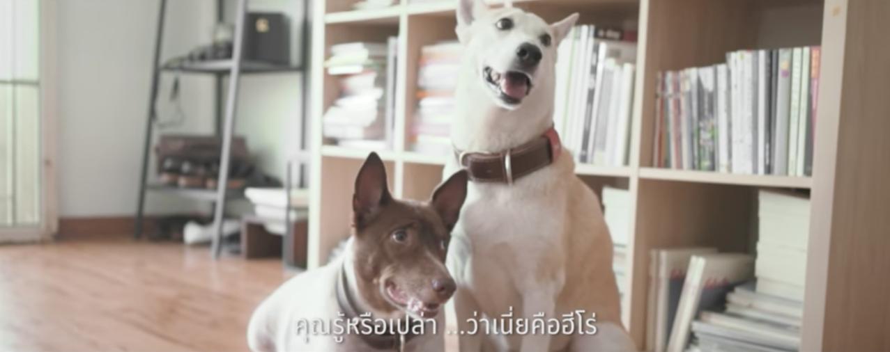 บาร์บีคิว พลาซ่า ชวนน้องหมาเป็น 'ฮีโร่' บริจาคเลือดช่วยชีวิตเพื่อนสุนัขด้วยกัน
