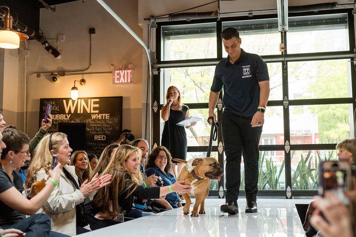 Rescue the Runway แฟชั่นโชว์คนกับน้องหมา! ไอเดียหาบ้านใหม่ให้สุนัขจรจัด