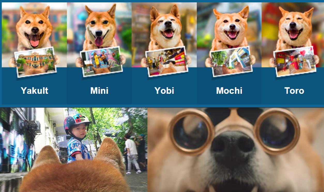 การท่องเที่ยวฮ่องกงวิถีใหม่ จับแกงค์ We5 น้องหมาเจ้าถิ่นถ่ายรูปนำทัวร์