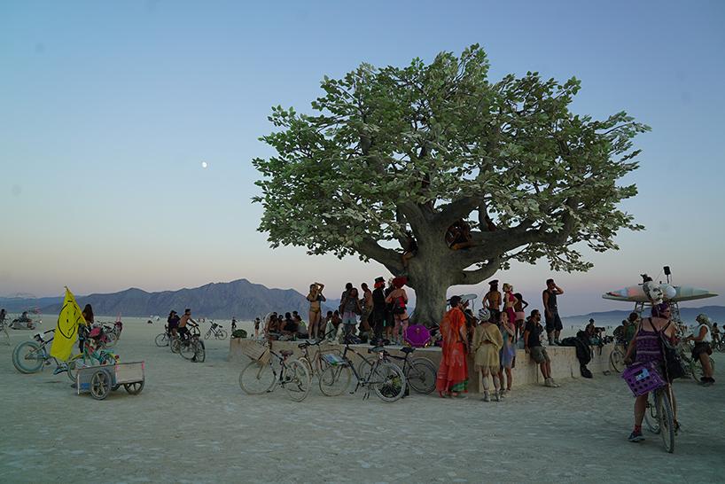 Tree of Ténéré : ต้นไม้โดดเดี่ยวที่สุดในโลก
