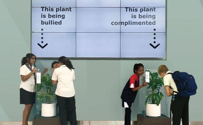 Bully A Plant: ดูแลต้นไม้ด้วยคำพูดแย่ๆ ผลที่ได้ทำเด็กๆ อึ้งทั้งโรงเรียน