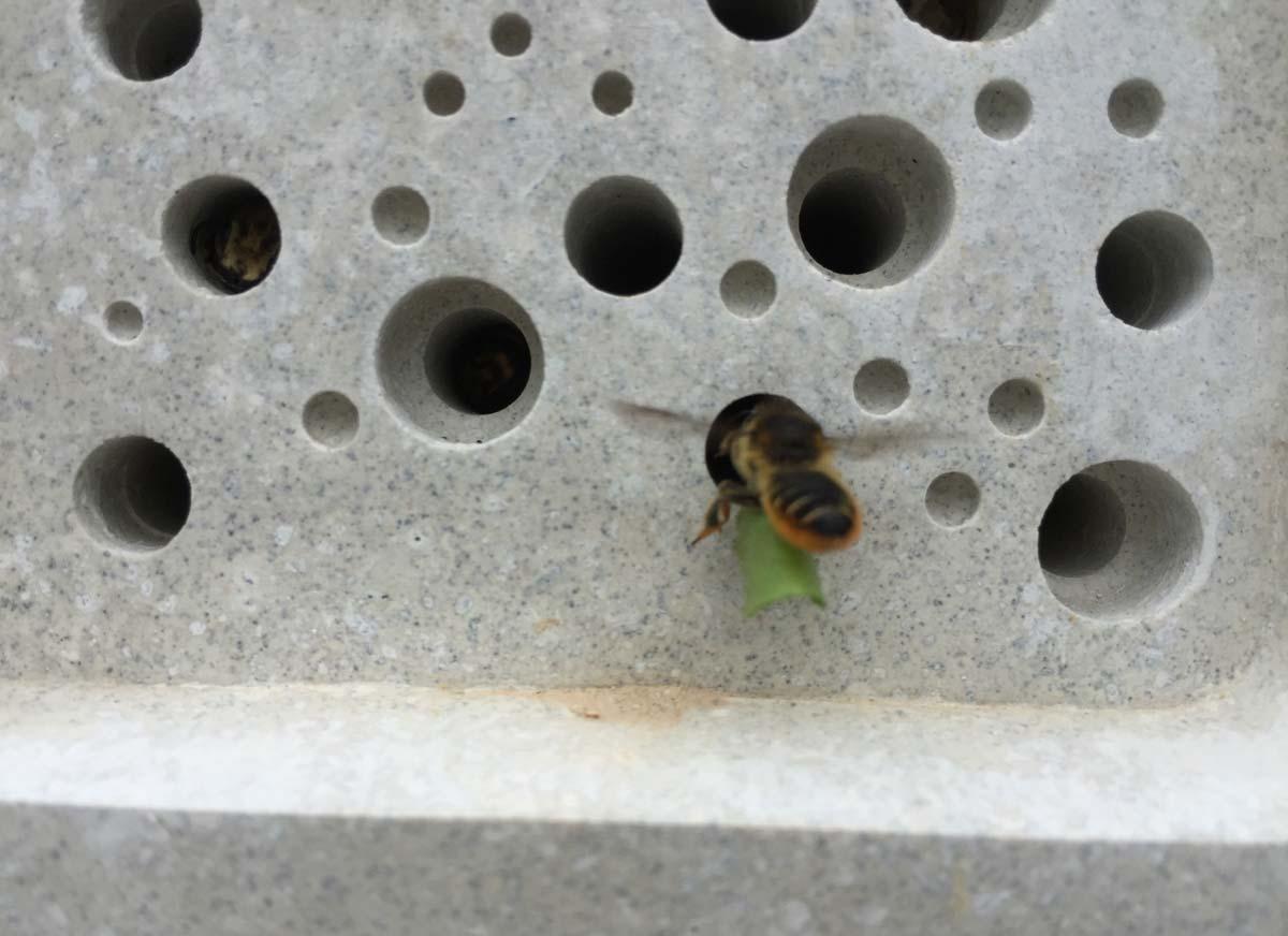 Bee Brick อิฐรังผึ้งสำหรับผึ้งอินดี้ที่อาศัยอยู่โดดเดี่ยว ช่วยรักษาสมดุลระบบนิเวศน์