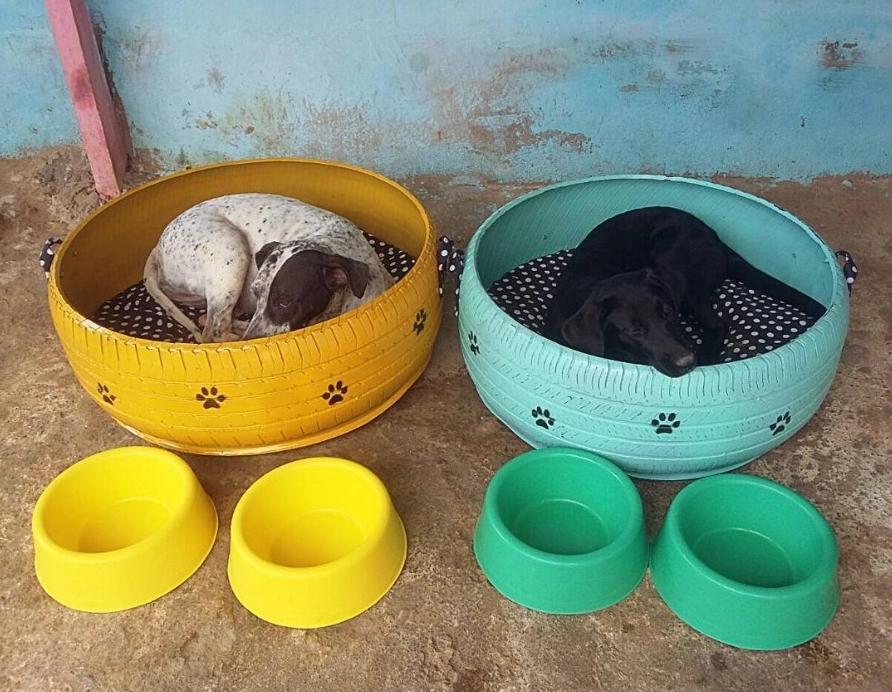 ที่นอนสีสดใสจากยางรถยนต์เหลือใช้ บ้านใหม่สำหรับน้องหมาแมวเร่ร่อน