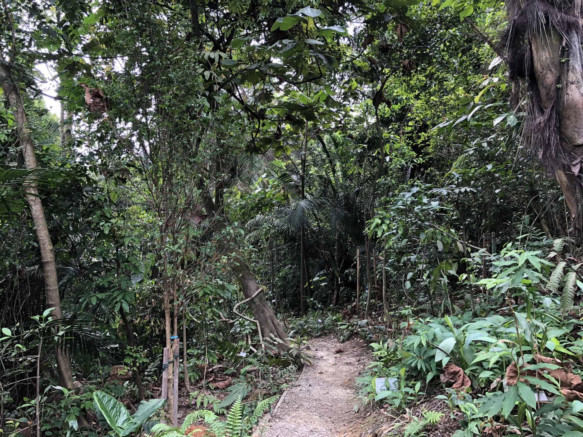 Free Tree Society On-the-Go จะปลูกป่าในเมืองต้องเพาะเมล็ดพันธุ์ในใจคน
