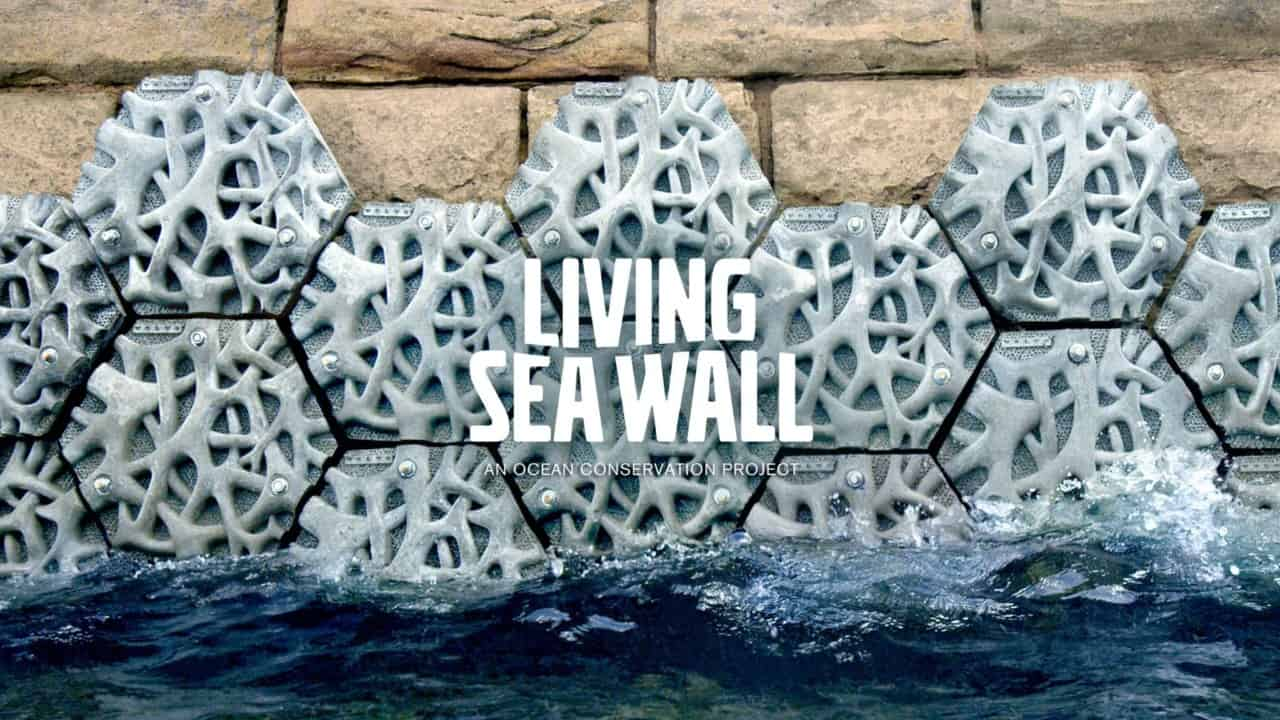 Living Seawall บ้านหลังใหม่ของสิ่งมีชีวิตในทะเล ช่วยกรองสิ่งสกปรกในน้ำได้ด้วย