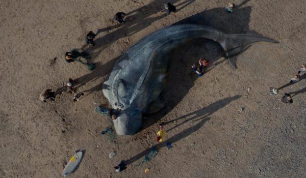 The Creature: พบสัตว์ประหลาดยักษ์เกยตื้นกำลังตายให้เดาว่าเพราะอะไร?
