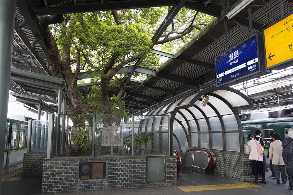 เก่า-ใหม่ ก็ไปด้วยกันได้ ต้นไม้อายุกว่า 700 ปีกลางสถานีรถไฟฟ้าคะยะชิมะในญี่ปุ่น