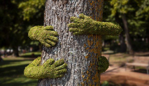 Tree Hug รักต้นไม้...เพราะเรากับต้นไม้ไม่อาจพรากจากกัน