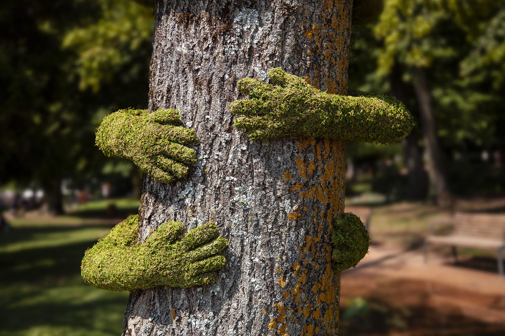 Tree Hug รักต้นไม้…เพราะเรากับต้นไม้ไม่อาจพรากจากกัน