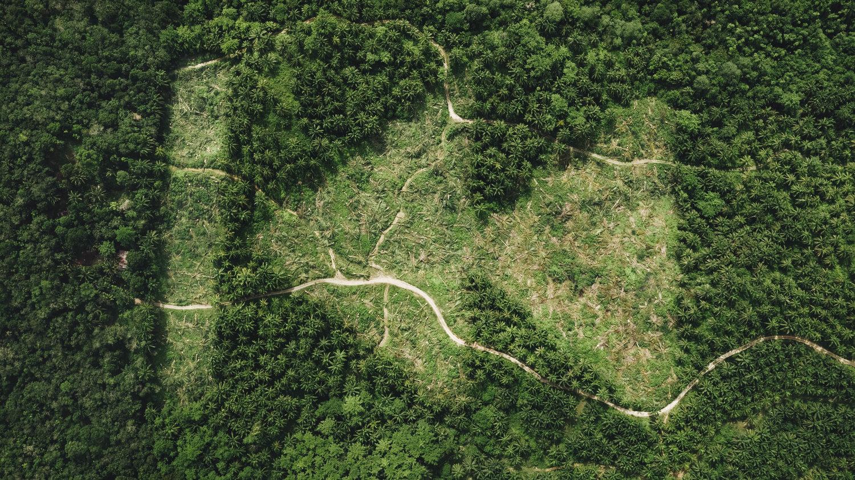 REWILD: ย้อนเวลากลับไปสู่สภาพป่าที่สมดุล