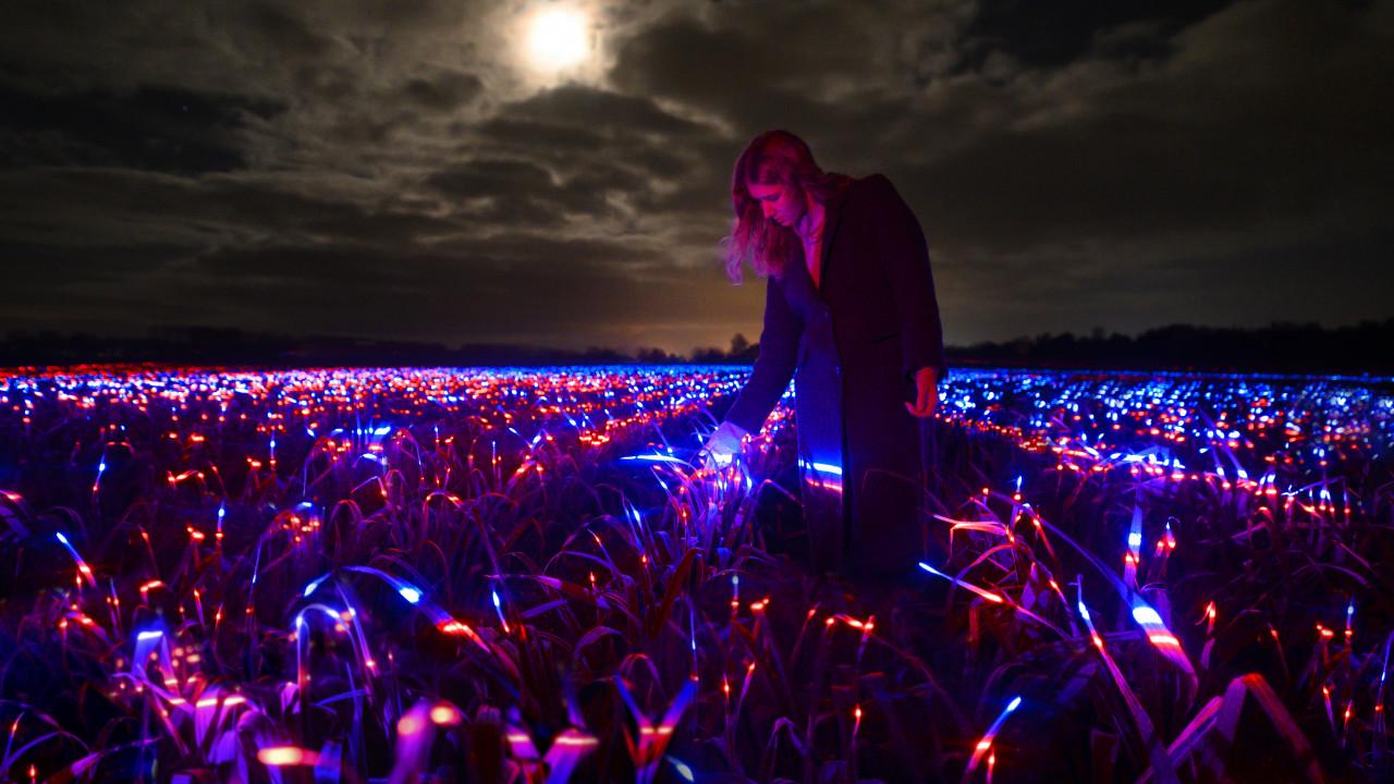 GROW งานศิลปะแสงสีไฟ LED ช่วยพืชผลโตเร็ว เพิ่มภูมิคุ้มกัน ลดยาฆ่าแมลง 50%